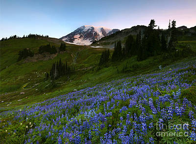 First Light Photograph - Majestic Meadow by Mike Dawson
