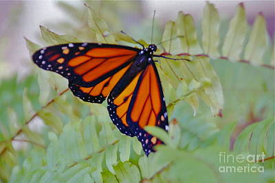 Photograph - Majestic Monarch by Barbara Plattenburg