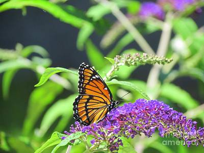 Personalized Name License Plates - Majestic Monarch Butterfly by Elizabeth Dow