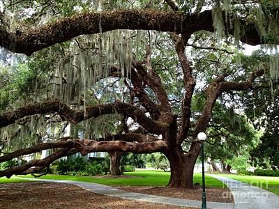 Photograph - Majestic Oak by Enid Gough