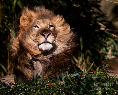 Photograph - Majestic One by Dale Nelson