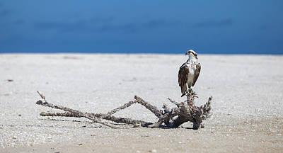 Photograph - Majestic Osprey by Sean Allen