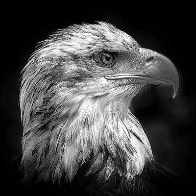 Eagle Wall Art - Photograph - Majestic by Peter Pfeiffer