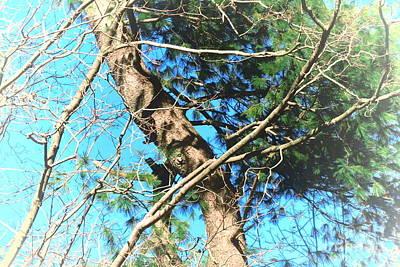 Photograph - Majestic Pine Tree Abstract by Tara  Shalton