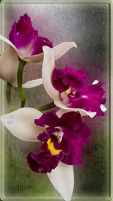 Photograph - Majestic Purple Orchid by Roy Foos