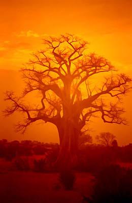 Baobab Photograph - Majestic Sunset Tree by Douglas Barnard