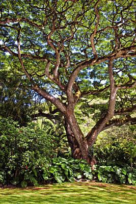 Calm Photograph - Majestic Tree by Marcia Colelli