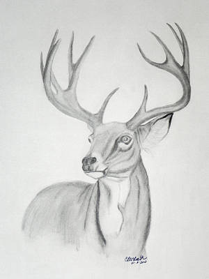 Drawing - Majesty by Cheryl McKeeth