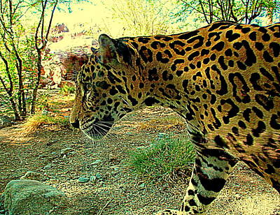 Jaguar Animal Photograph - Majika Paces by Randall Weidner