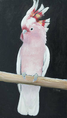 Cockatoo Painting - Major Mitchell Cockatoo by Jan Matson