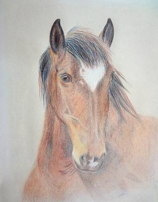 Animals Drawings - Major by Peggy Clark