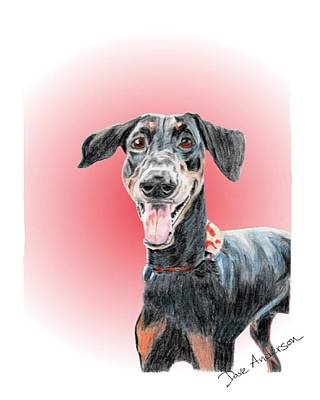 Animal Shelter Drawing - Maka - A Former Shelter Sweetie by Dave Anderson