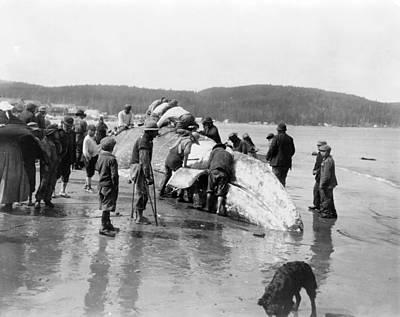 Neah Bay Photograph - Makah Whaling, C1910 by Granger