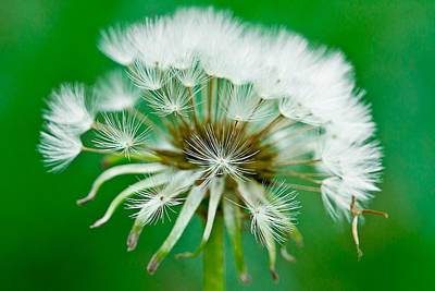 Photograph - Make A Wish by Annette Hugen