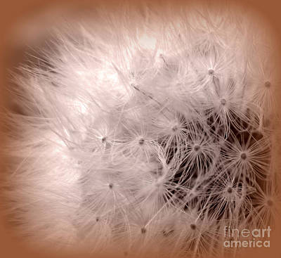 Photograph - Make A Wish by C Ray  Roth