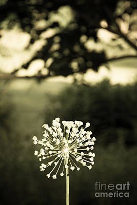 Photograph - Make A Wish by Chris Scroggins