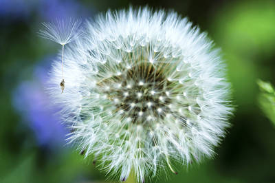 Photograph - Make A Wish by Christi Kraft