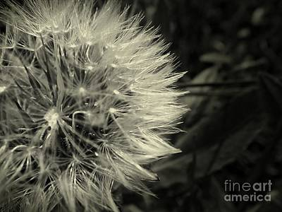 Art Print featuring the photograph Make A Wish by Clare Bevan