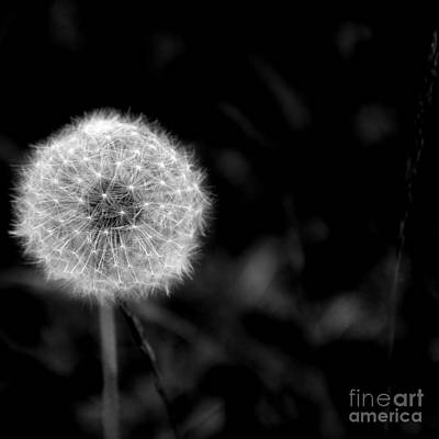Photograph - Make A Wish by Debra Fedchin