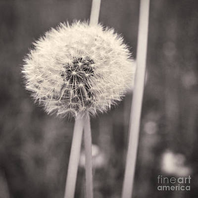 make a wish II Art Print by Priska Wettstein