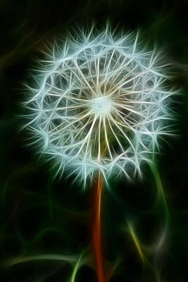 Photograph - Make A Wish by Joann Copeland-Paul
