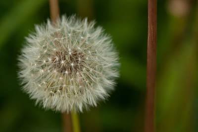 Photograph - Make A Wish by Karol Livote