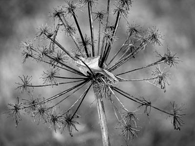 Photograph - Make A Wish by Kimberly Mackowski