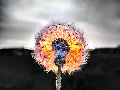Selective Color Photograph - Make A Wish  by Marianna Mills