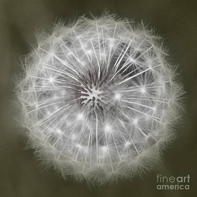 Art Print featuring the photograph Make A Wish by Peggy Hughes