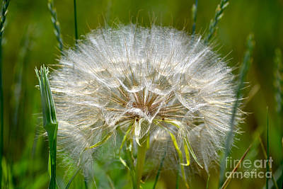 Photograph - Make A Wish by Suzette Kallen
