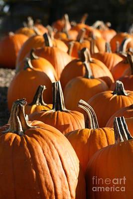 Photograph - Make Way For Pumpkins by Barbara Bardzik