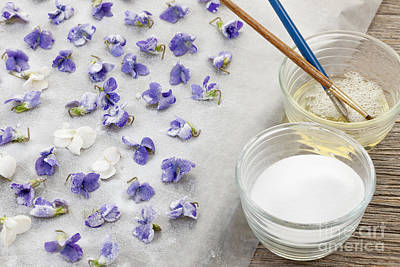 Violet Photograph - Making Candied Violets by Elena Elisseeva
