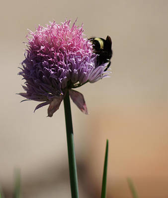 Photograph - Making Chive Honey by Shirley Heyn