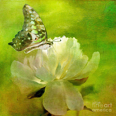 Malachite On Peony Art Print by Lois Bryan