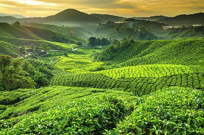 Photograph - Malaysia, Pahang, Cameron Highlands by Cescassawin