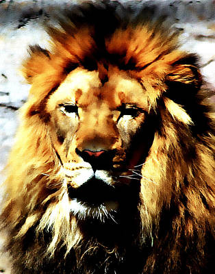 Male African Lion 2 Art Print