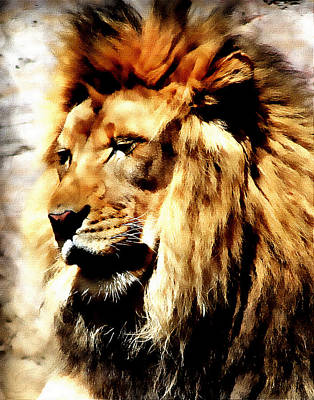 Male African Lion Art Print