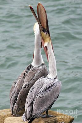 Male Brown Pelican Neck Exercise Art Print by Darleen Stry