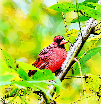 Photograph - Male Cardinal - Artsy  by Kerri Farley