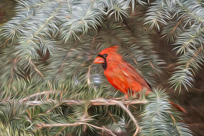 Photograph - Male Cardinal In Spruce Tree by Patti Deters