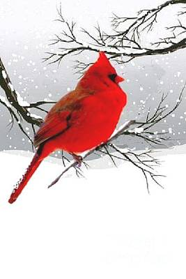 Photograph - Male Cardinal In Winter by Janette Boyd