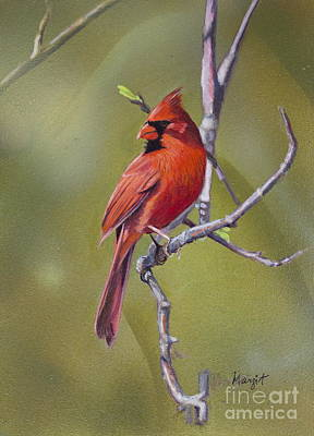 Painting - Male Cardinal  by Margit Sampogna