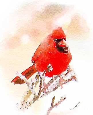 Photograph - Male Cardinal - Watercolor by Kerri Farley