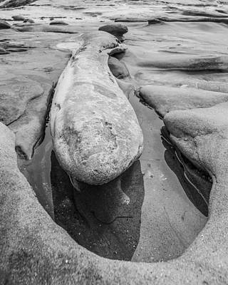 Photograph - Male Erosion Dysfunction Black And White by Scott Campbell