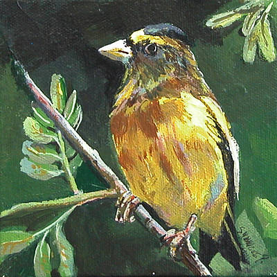 Painting - Male Evening Grosbeak by Synnove Pettersen