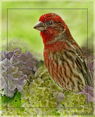 Art Print featuring the photograph Male Finch In Hydrangesa by Debbie Portwood