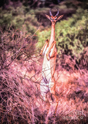 Digital Art - Male Gerenuk by Liz Leyden