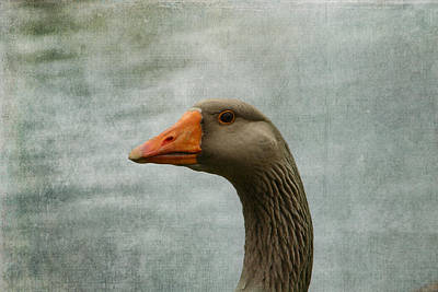 Male Graylag Goose Profile Art Print