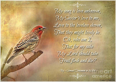 Photograph - Male House Finch With Hymn II by Debbie Portwood