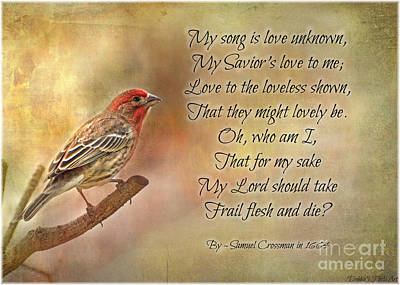 Photograph - Male House Finch With Hymn IIi by Debbie Portwood